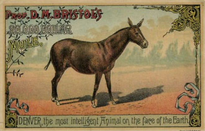 The $40 mule was such an asset to the show, he was valued at $20,000.
