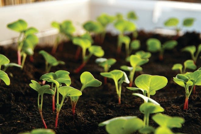 To seed or not to seed is the gardening question and workshop topic on April 29 at Myriad Botanical Gardens