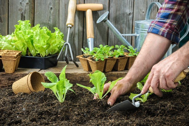 Growing some of your own fruits and vegetables means they are at their peak of ripeness and flavor when you bring them to the table.