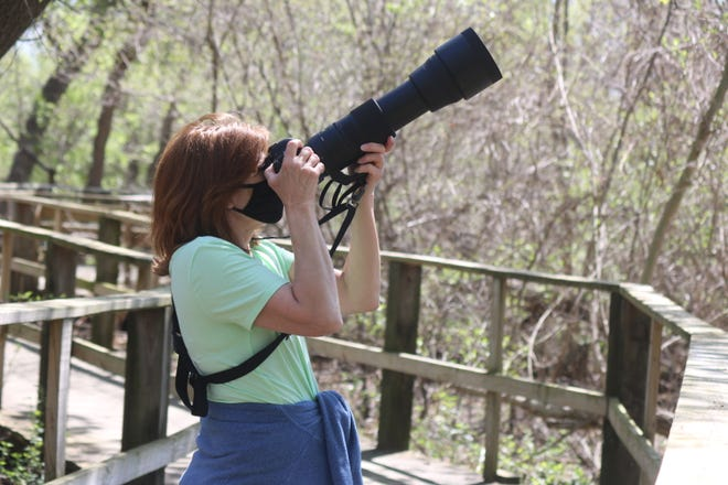 Carol Poulos, of Ann Arbor, snaps some photos while birding along the boardwalk at Magee Marsh on Tuesday.