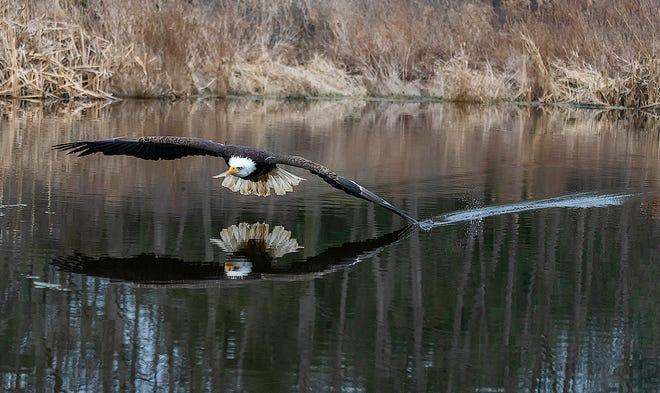 """""""Freedom Flight"""" by Cindy El-Gaaly."""