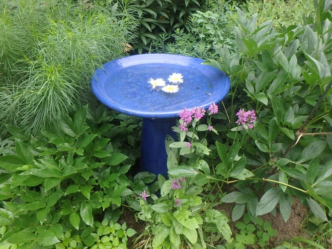 A simple blue birdbath can add color and interest to the garden.