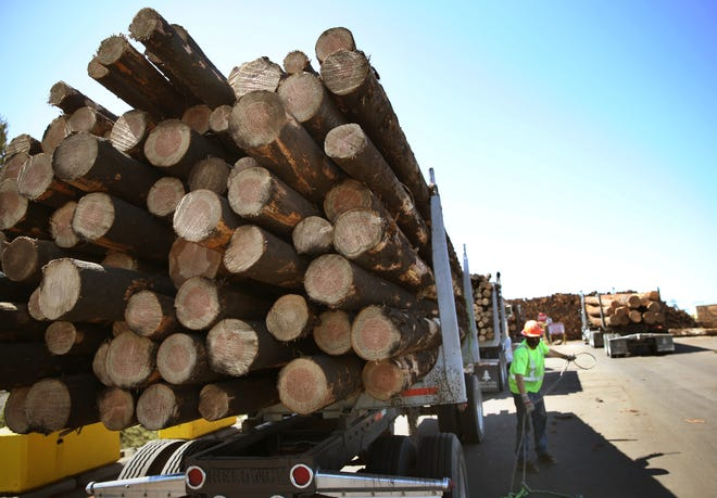 Lyle Pitley with Schuyler & Sons Inc. takes the cable wraps off a load of fire salvage timber at the Seneca Sawmill Company in Eugene.