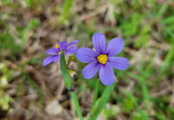 Wildflowers are also starting to bloom as spring gets its start.