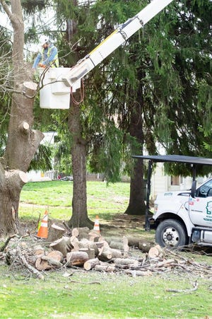 Wright's Tree Service uses a bucket truck to clear limbs from a tree in Barnesville.