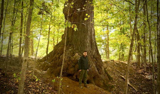 Marc DeWerth with a white oak tree in Spencer, Ohio