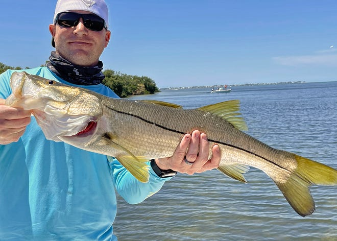 Kyle Makin, of Shawnee, Kansas, caught this 31-inch snook on a live scaled sardine in Terra Ceia Bay while fishing with Capt. John Gunter this week.