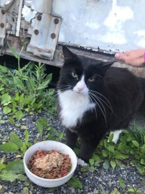 Flint gets his meal by the dumpster where he's been living for several years.