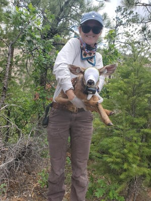 Hannah Manninen, a master's student in forestry at Southern Illinois University Carbondale, holds a mule deer fawn captured briefly for tracking purposes. A graduate student at SIU, Manninen is working with the Navajo Nation to unlock secrets of the mule deer migration to identify key habitats and arrest the species decline.