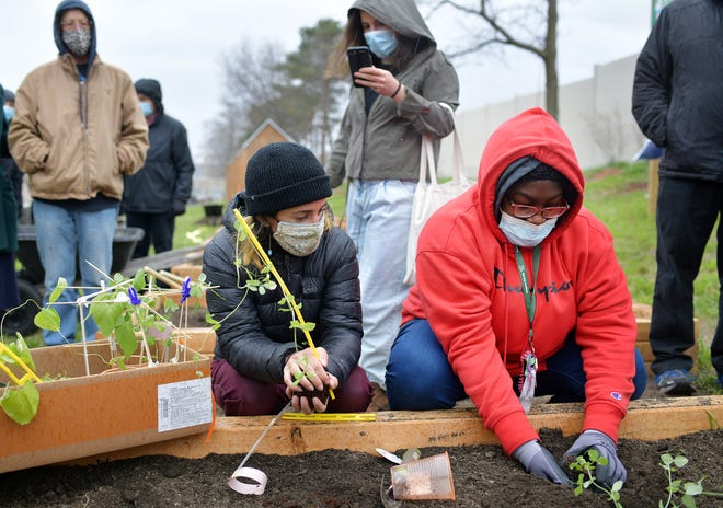Eliza Lawrence, school gardens manager at the Regional Environmental Council, works with student Nadia Baah,16, on planting a cold crop pea plant