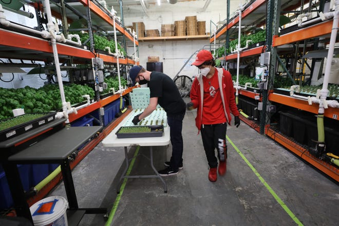 Finn Ban and Austin Tenn Luke, students with autism who are part of the Workforce Development Program, plant seeds at Greens Do Good, a hydroponic, vertical farm in Hackensack.