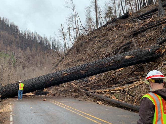 A large tree fallen across the Clackamas River Highway 224 earlier this month shows one reason why one of Oregon's most popular sections of river won't reopen.