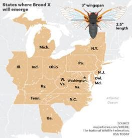 Members of the periodical cicada Brood X will emerge after 17 years underground in these states this summer. Due to the group's size, their mating calls are likely to be quite loud this year.