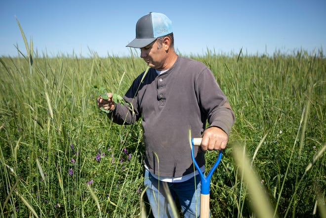 Tribal land provides the Nation additional income-generating opportunities through agricultural endeavors.