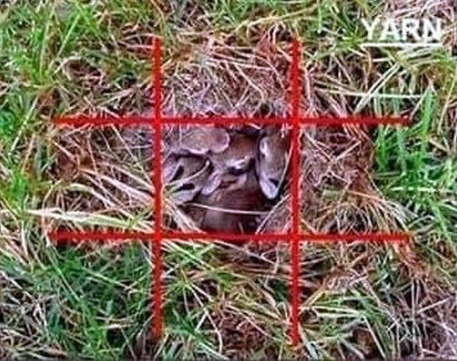 Placing yarn in a tic-tac-toe configuration over what appears to be an abandoned rabbit's nest will determine whether momma rabbit is tending her bunnies. If the yarn stays undisturbed, the bunnies are likely orphans; call Wild Care.