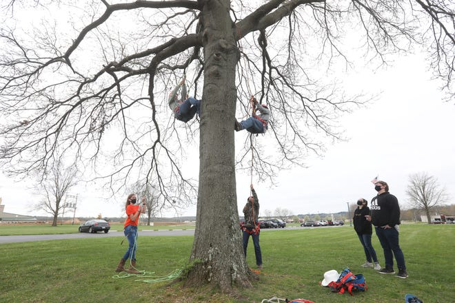 Coshocton High School sophomore Carter Donley, right, in tree, gets a demonstration of the tree climbing methods taught in Coshocton County Career Center's Natural Resources program on Wednesday. With him are CCCC students Shyanne Rahm, left, ground, Carah Mladek, in tree and Sydney Stewart, on the ground.