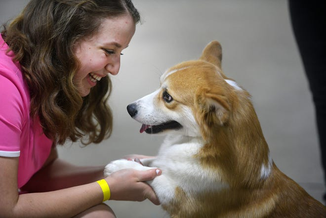 Lily Brenner of Sutton holds the paws of Pembroke Welsh corgi Lager after placing in the show. Lager is co-owned by Patience Sassone of New Hampshire.