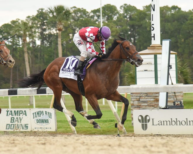 Helium and jockey Jose Ferrer won the Grade 2 Tampa Bay Derby on March 6. (Photo courtesy of SV Photography.)