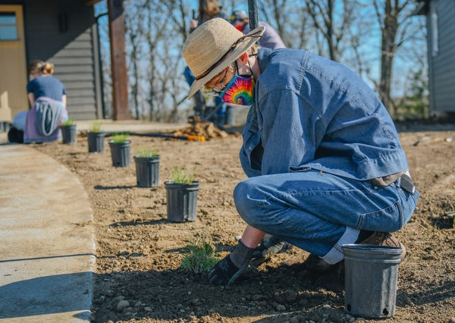 Hickman High School student Elias Calvin plants a native Missouri plant into the ground Monday morning at a house on Tomahawk Drive.
