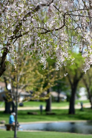 Trees are in bloom at Price Park in North Canton, helping to kick off a rough allergy season.