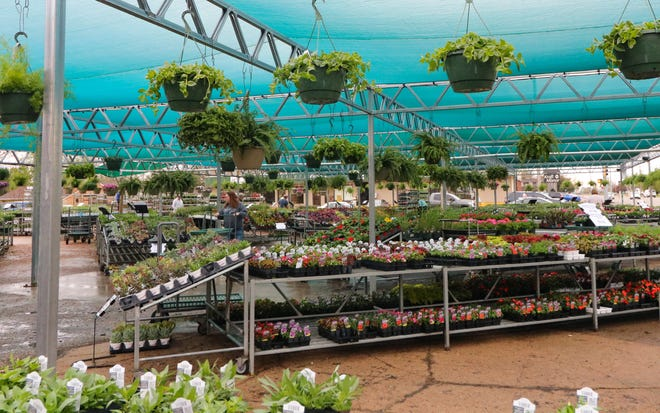 All of the plants sales at the Stutzman's Garden Center, located at the intersection of Ninth and Cloud St, in Salina Wednesday through Saturday will benefit the Salina Rescue Mission.