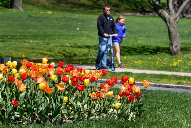 Spring flowers along Monument Drive in Swampscott on Tuesday, May 5, 2020. [Wicked Local Staff Photo / David Sokol]
