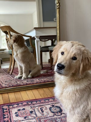 We are very aware that child stars face plenty of scrutiny, so we have done everything in our power to keep our most exceptional puppy grounded.