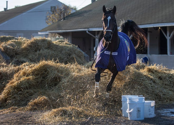 Kentucky Derby hopeful Midnight Bourbon breaks free of his handler while being lead from the barn to be bathed on the backside of Churchill Downs. April 19, 2021
