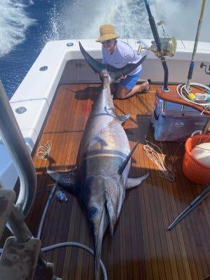 Jennifer Cameron of Stuart caught a 436-pound swordfish April 16, 2021 in 1,000 feet of water off Stuart.