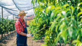 Let's Eat: What is a pesticide?