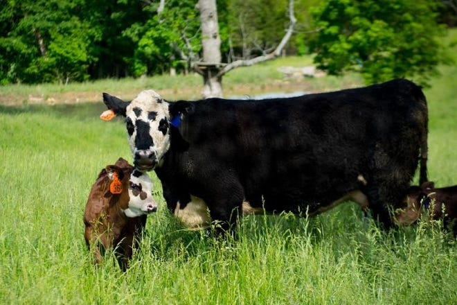 Newborn calves will soon be a common sight this time of year in pastures across the Midwest.