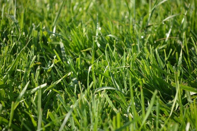 Maximizing and properly manage grazed forages can help producers put on more, lower-cost gains.