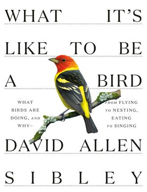 """Sibley's latest book """"What It's Like to Be a Bird."""" — """"When he did research for this new volume, he became convinced of something he had not previously anticipated: Birds routinely make complex decisions and experience emotions,"""" wrote Barbara J. King in an NPR book review."""
