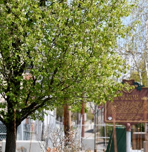 Donations of any size are being accepted by the city to help fund future projects planned for the newly renovated Duncan Plaza. A donation of $1,500 or more will be recognized with the dedication of a tree and plaque in the plaza. A donation of $700 or more will be honored with a hydrangea plant.