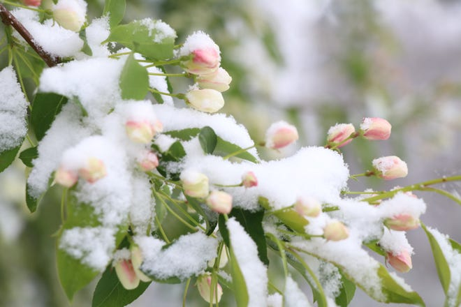 A late-season snow system moved through the St. Joseph County area Tuesday, dropping wet, heavy snow across the region. Snowfall is expected to continue into Wednesday, with nighttime temperature falling below freezing and threatening spring flowers, blossoms and crops.