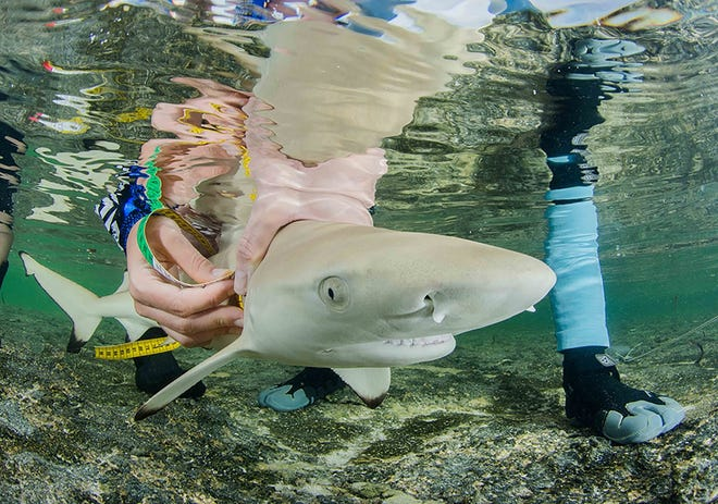 The Save Our Seas Foundation announced it's small grant applications are now available.