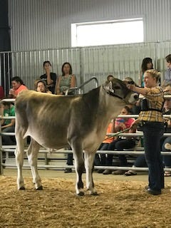 Kyla Stockdale, 17, of Marion, with a dairy heifer at the Marion County Fair. Stockdale is hosting the Open Hearts Livestock Show at this year's fair, which will be for people with disabilities.