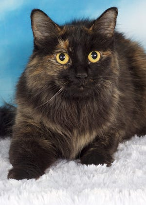 If you're interested in Nalani, please go to azfriends.org to fill out a consultation form and then head to the adoption center at 952 W. Melody Ave. in Gilbert.