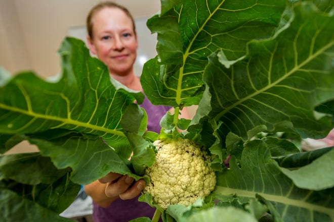 Market manager Amy Sutter holds some fresh cauliflower at Augusta Locally Grown's new Harlem pickup location.