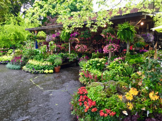 Residents are invited to shop local garden centers Saturdays, May 1 and May 8, across Henderson County just in time for Mother's Day. Briggs Garden Center is shown in this photo.