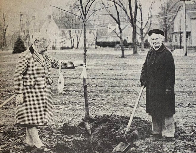 Mrs. LeRoy Junkins (left) and Mrs. Fred Page are shown dedicating a Red Oak tree on behalf of the Exeter Chapter of the Daughters of the American Revolution at the Park Street Common, November 6, 1974.