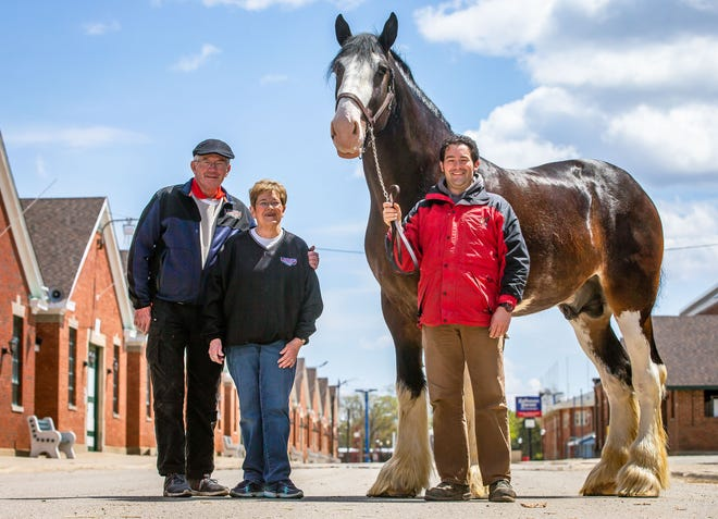 Grant Johnson, center, along with his mother and father, Linda and Dennis Johnson, of Linden Clydes, show off Tobias, a Clydesdale stallion from Soaring Eagle Farms, that will be on sale for the National Clydesdale Sale at the Illinois State Fairgrounds in Springfield, Ill., Wednesday, April 21, 2021. The entire Johnson family volunteers with the sale which has a connection to Springfield and the fairgrounds going back to the mid-1980s. [Justin L. Fowler/The State Journal-Register]