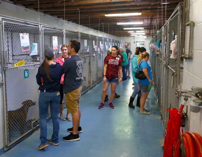 People walk through the indoor kennel as they look at the dogs up for a adoption during the Summer Lovin Adopt-A-Thon at Alachua County Animal Services in Gainesville in August 2019.