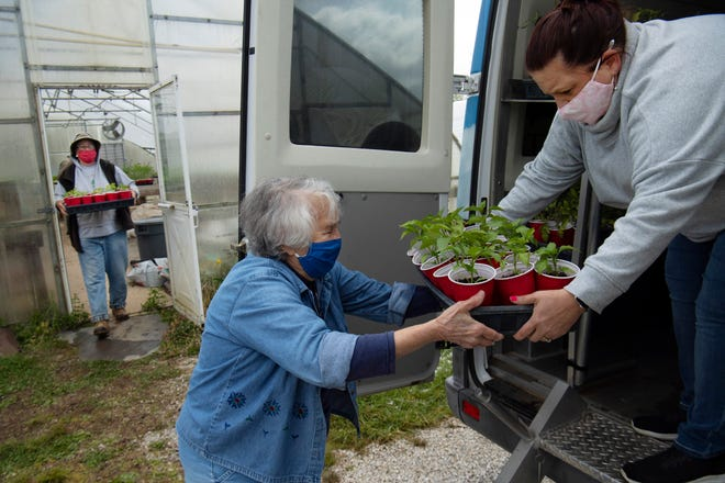 Sister Marilyn Moore, center, hands a tray of starter plants grown at Seton Harvest community agriculture initiative to Julie Dietz for transport to Mead Johnson in Evansville Wednesday morning, April 21, 2021. The farm is in its 16th season.