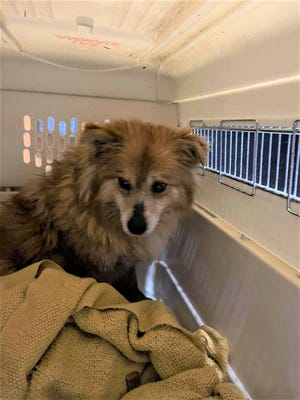 A stray dog the community named Butters is finally in safe hands at a local rescue after being on the run for five months. The stray had been frequenting a neighborhood on the city's south side, where Good Samaritans were feeding her.
