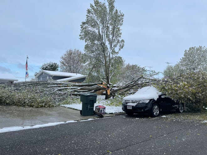 After a snow storm in April, two Marion residence are dealing with a fallen tree in their front yards, driveways and on top of their cars. No one was injured from the fallen tree and neither of the two homes took any damages.