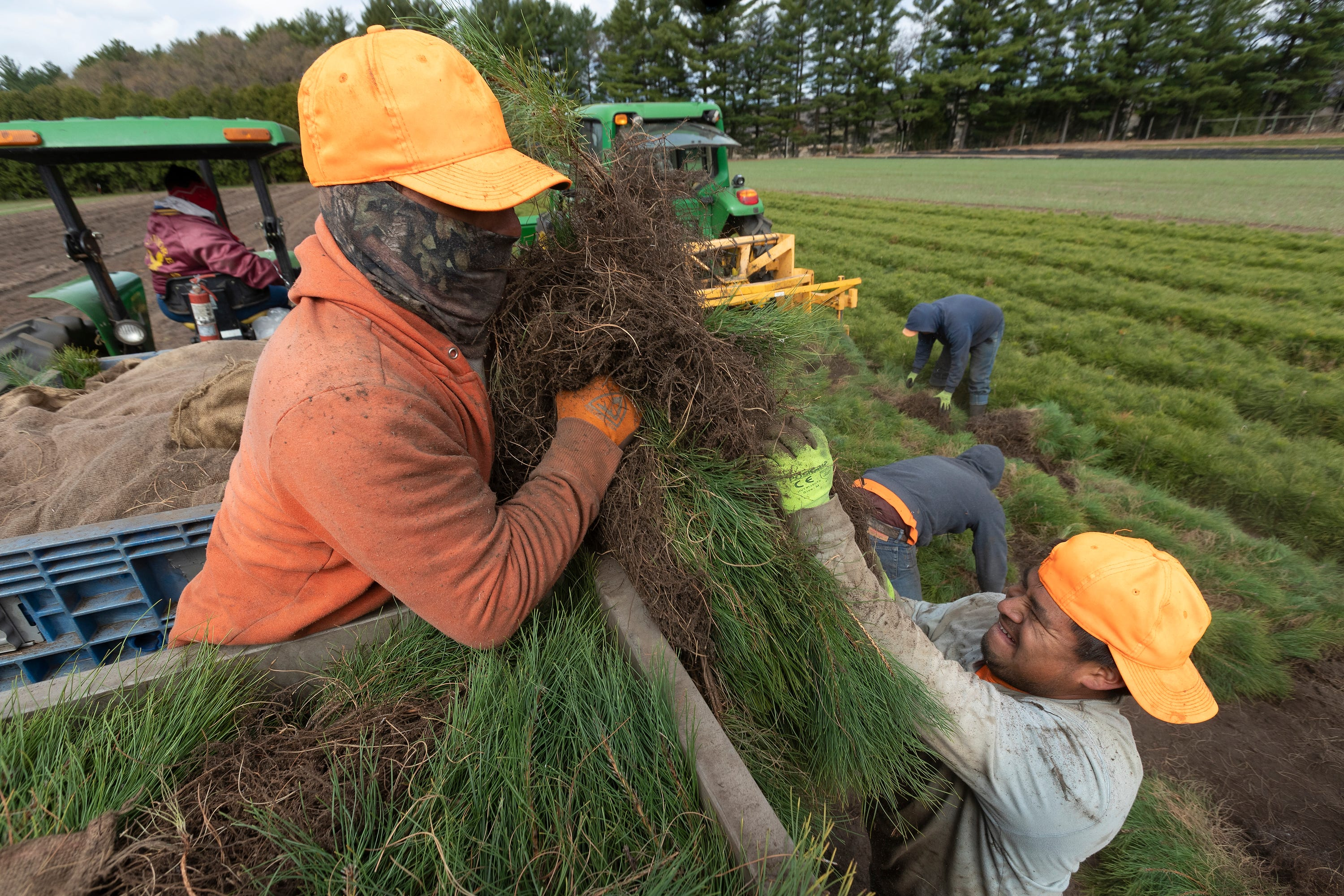 State nurseries help keep Wisconsin forested