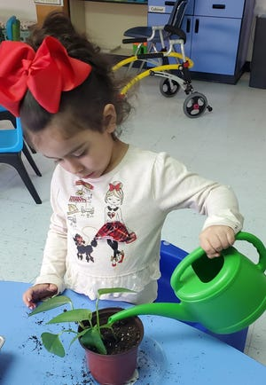 Aleena Ayala, a student in Jessica Hughes' class at Cunningham Elementary School, waters an ivy cutting from Hughes' grandmother.