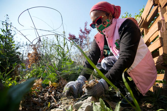 Tanya Walker, of New Albany, weeds garden beds as a group of volunteers work to clean-up Bethany Bronzeville Community Garden Thursday for Earth Day.