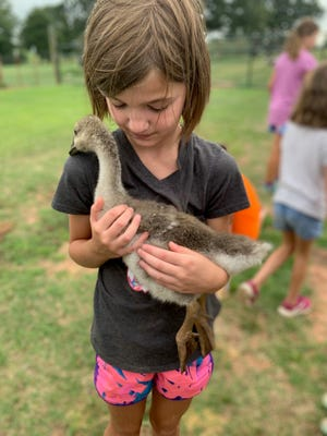 Children learn about gardening and taking care of farm animals during summer Farm Camp.